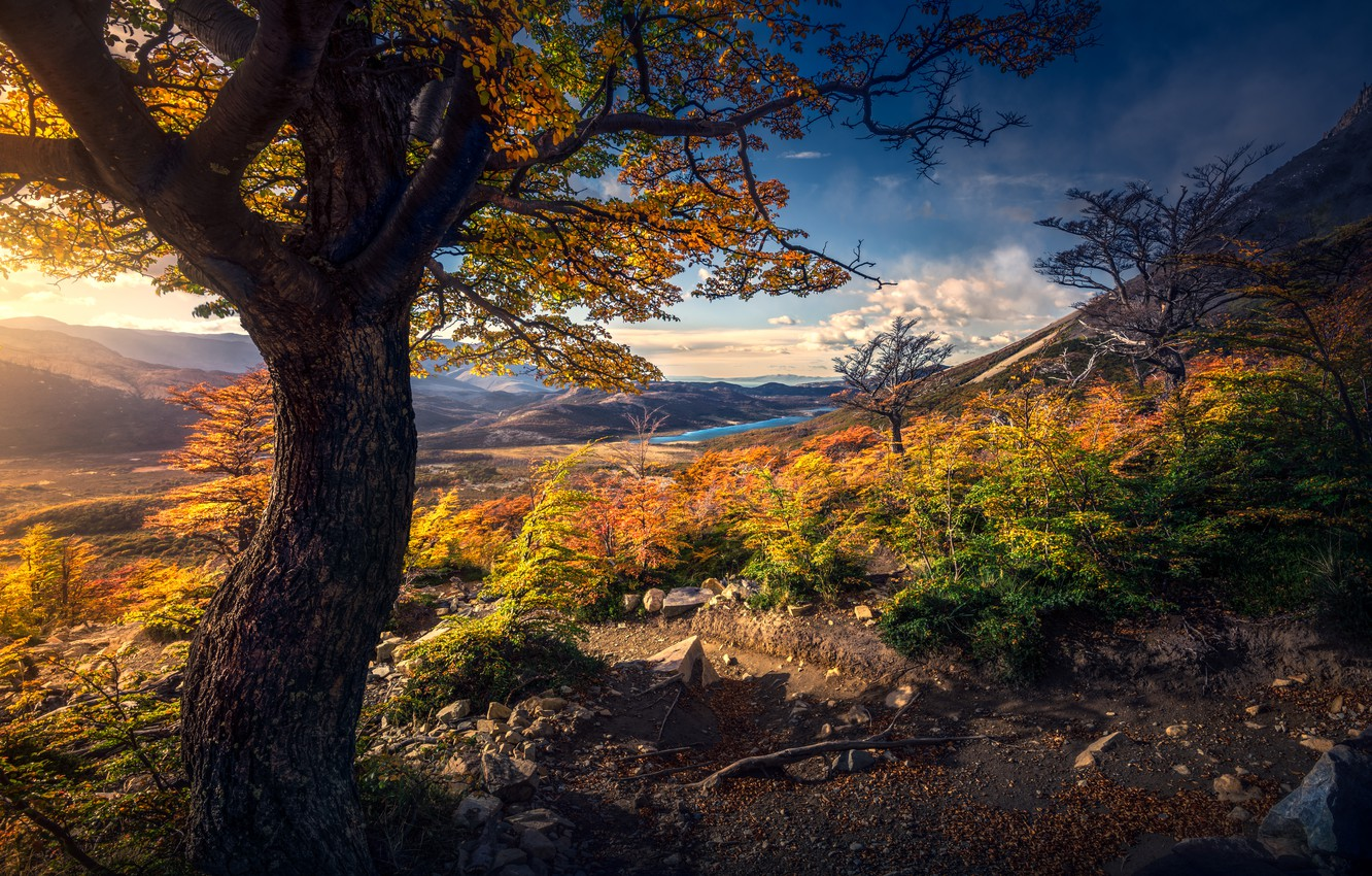 Photo wallpaper autumn, leaves, mountains, branches, tree, yellow, slope, the bushes, Golden autumn