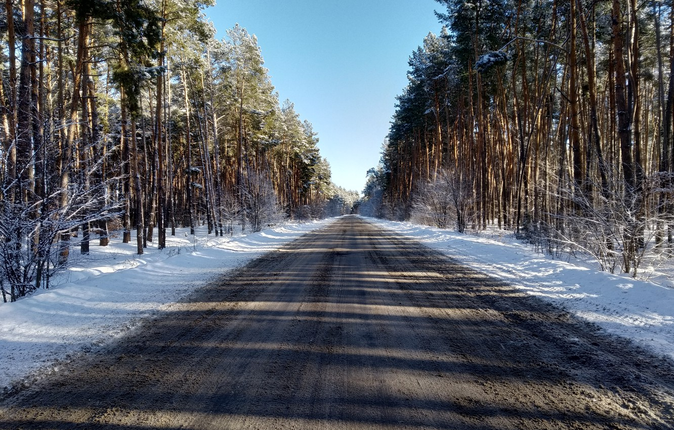 Photo wallpaper winter, road, forest, snow, pine