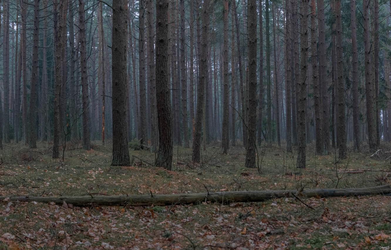 Photo wallpaper green, forest, landscape, three