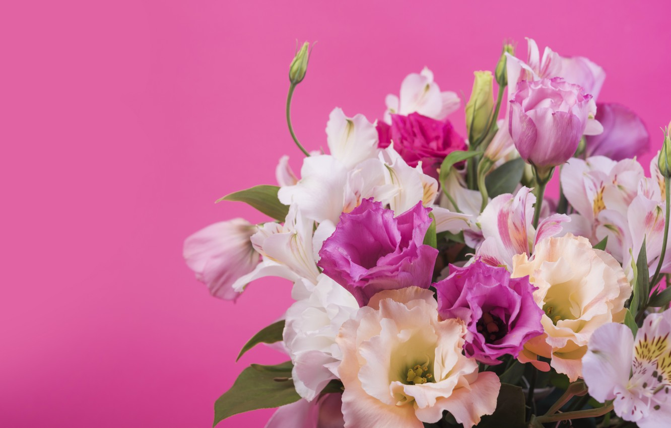 Photo wallpaper flowers, background, pink, Lily, pink, flowers, lily