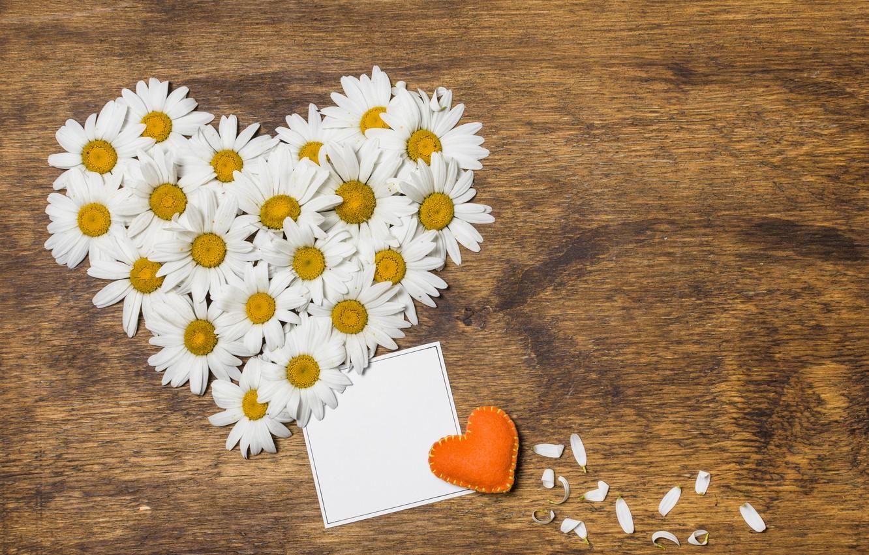 Photo wallpaper love, flowers, heart, chamomile, love, heart, wood, flowers, romantic, camomile, floral