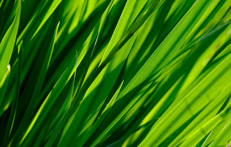 Photo wallpaper greens, grass, macro