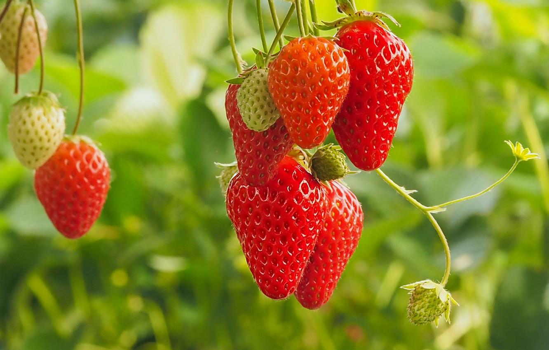 Photo wallpaper berries, strawberry, bokeh