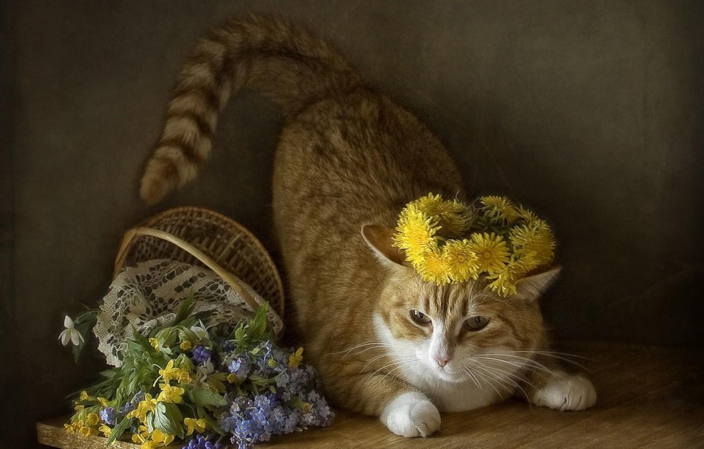 Photo wallpaper cat, cat, flowers, spring, basket