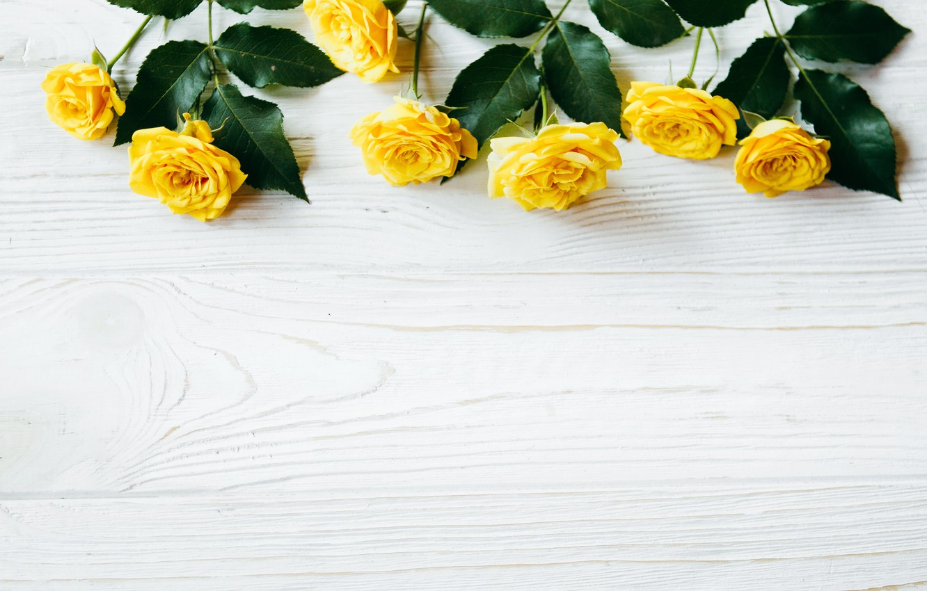 Photo wallpaper flowers, roses, yellow, summer, yellow, wood, flowers, roses