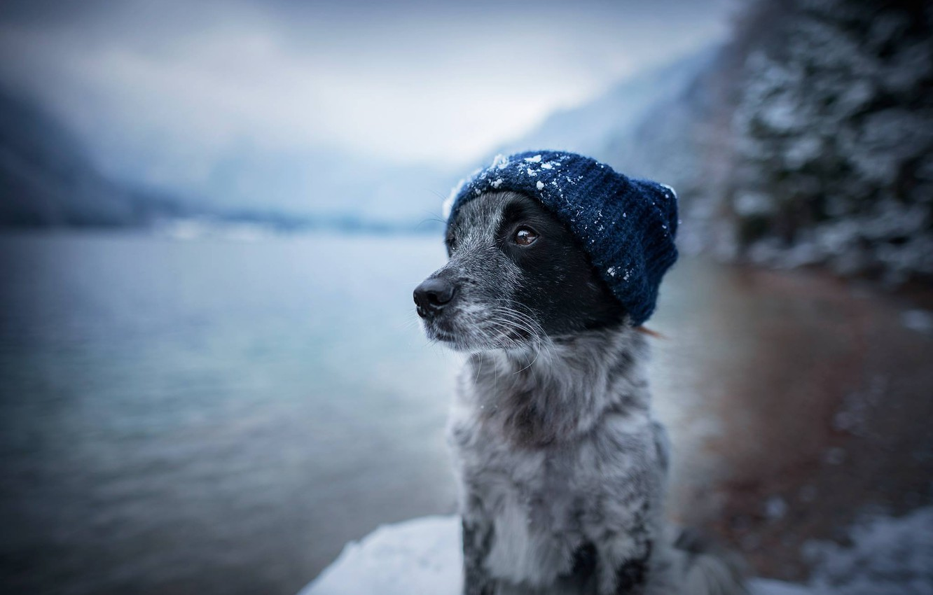 Photo wallpaper face, water, snow, hat, dog, dog