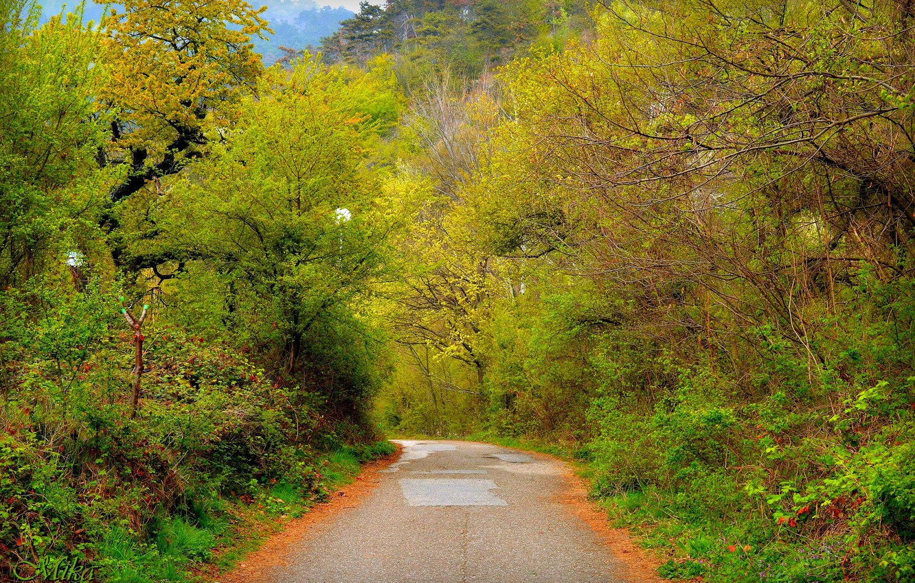 Photo wallpaper Trees, Forest, Trail, Road, Forest, Trees