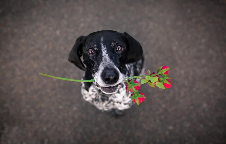 Photo wallpaper flower, each, dog