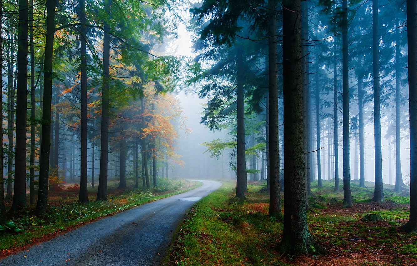 Photo wallpaper autumn forest, misty morning, the bend in the road
