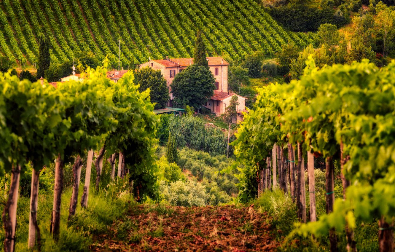 Photo wallpaper house, Italy, vineyard, Tuscany