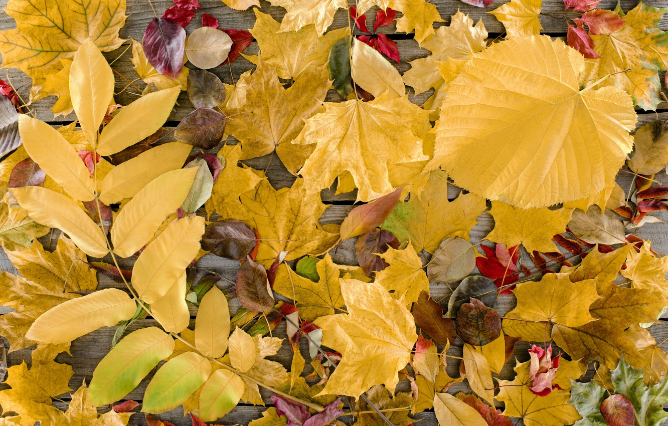 Photo wallpaper autumn, leaves, background, tree, Board, colorful, wood, background, autumn, leaves, autumn