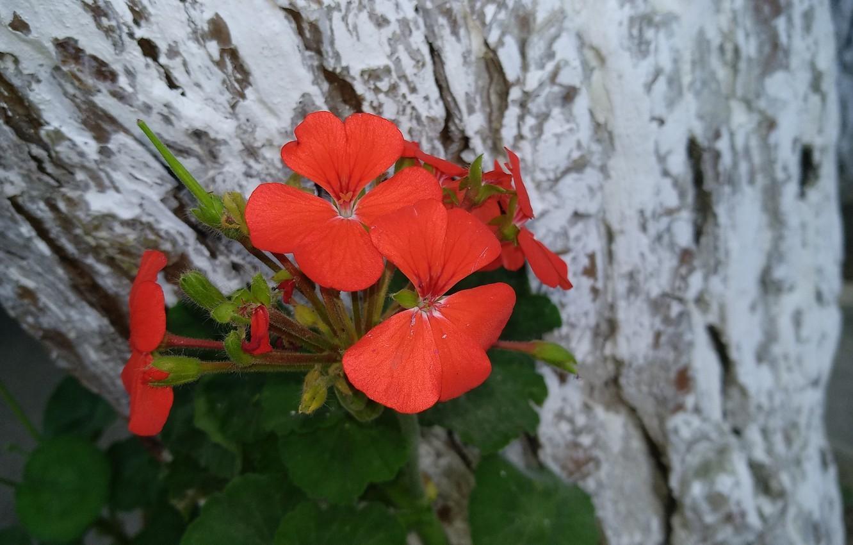 Photo wallpaper Flowers, Flowers, Red flowers
