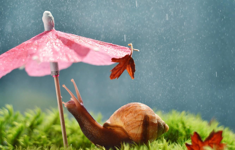 Photo wallpaper umbrella, rain, snail