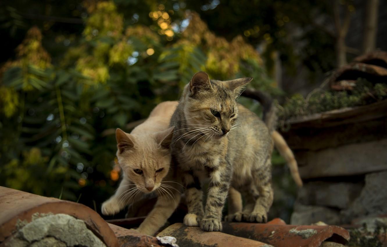 Photo wallpaper cats, cats wallpapers, Bulgaria, Nessebar, cute cats, Kide fotoart