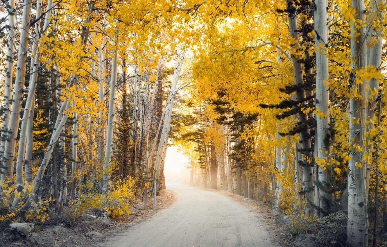 Photo wallpaper road, autumn, trees