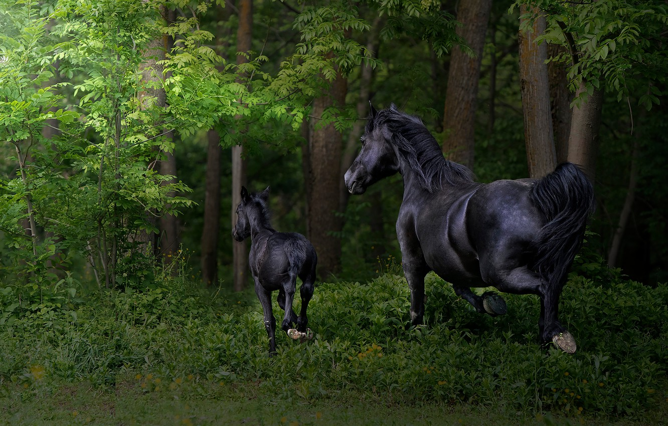 Photo wallpaper forest, grass, branches, foliage, horses, baby, horse, running, pair, walk, mom, two, foal, black