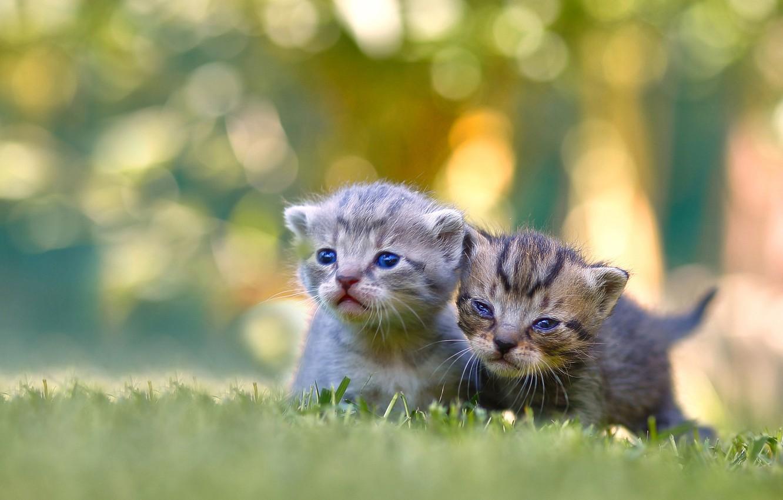 Photo wallpaper kittens, kids, a couple, bokeh