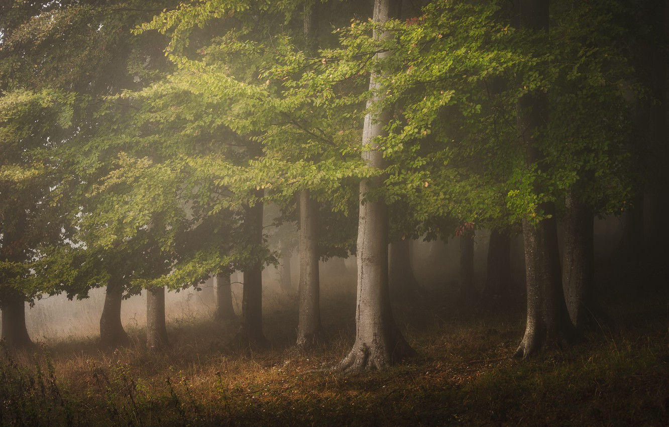 Photo wallpaper forest, nature, fog