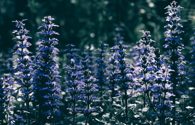 Photo wallpaper summer, flowers, nature