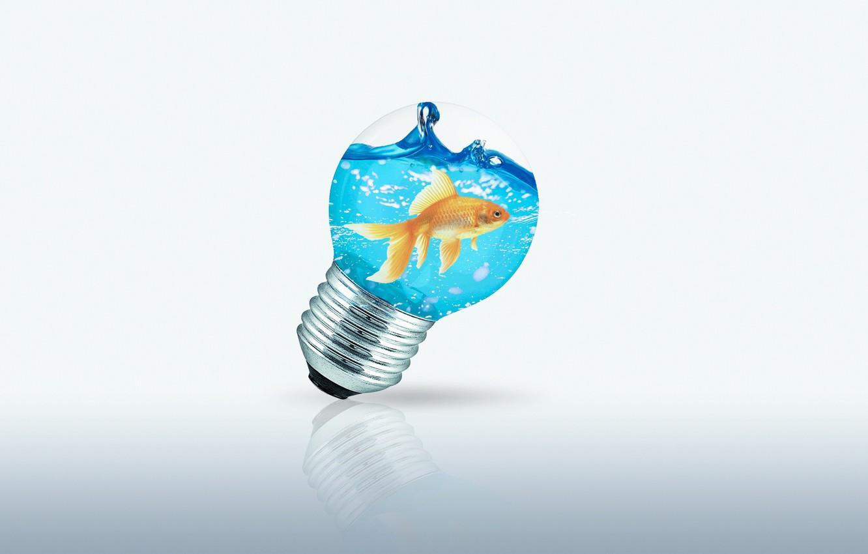 Photo wallpaper sea, water, photo, lamp, fish, goldfish, Wallpaper 1920x1080, Wallpaper desktop 1920x1080, fish in lamp