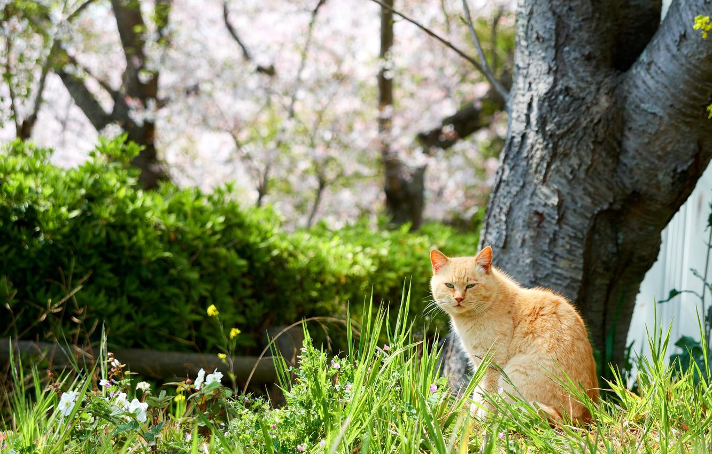 Photo wallpaper greens, cat, grass, cat, flowers, nature, tree, spring, garden, red, walk
