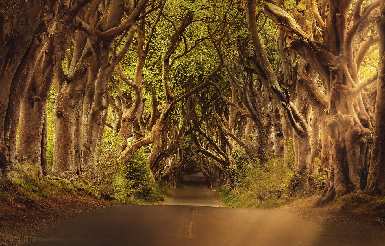 Photo wallpaper road, trees, branch, crown