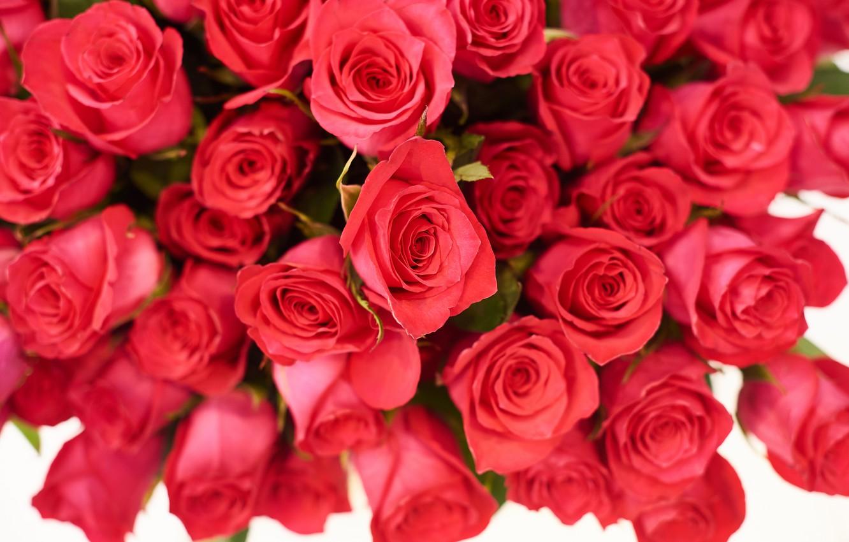 Photo wallpaper roses, bouquet, red, Olga Nosova