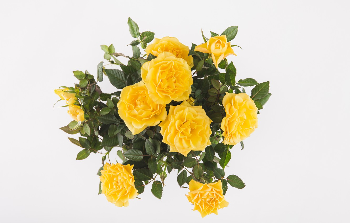 Photo wallpaper background, roses, bouquet, yellow