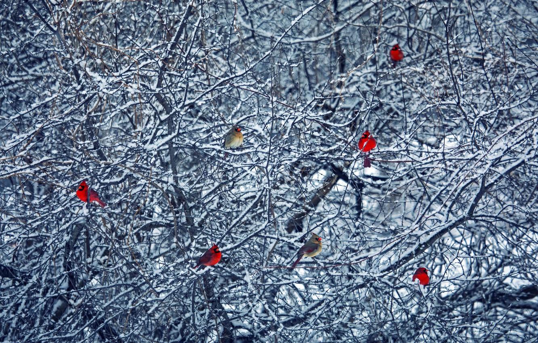 Photo wallpaper winter, birds, tree