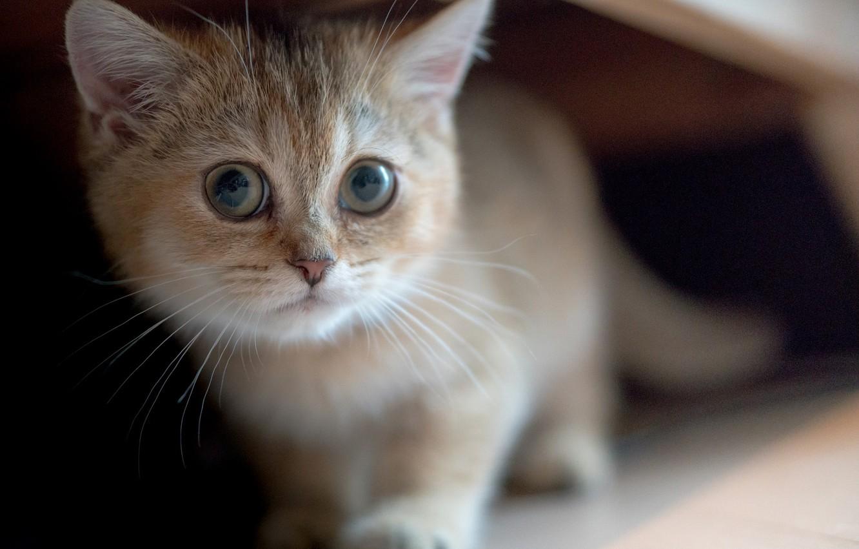 Photo wallpaper kitty, blur, muzzle