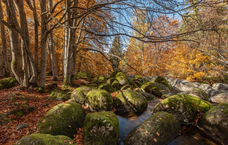Photo wallpaper autumn, forest, water, trees, landscape, nature, stones, Alexander Sandev