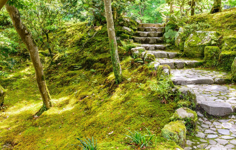 Wallpaper Nature Japan Ladder Garden Steps Nara Images For Desktop Section Priroda Download