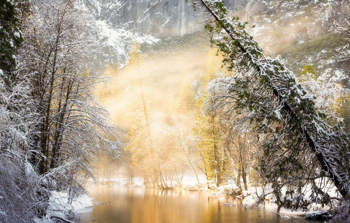 Photo wallpaper winter, forest, river