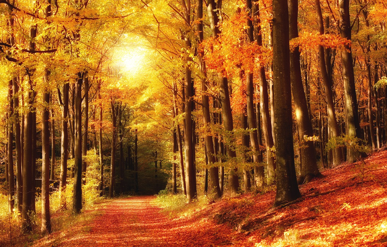 Photo wallpaper autumn, forest, leaves, trees, Park, trail, colorful, forest, landscape, park, autumn, leaves, tree, fall