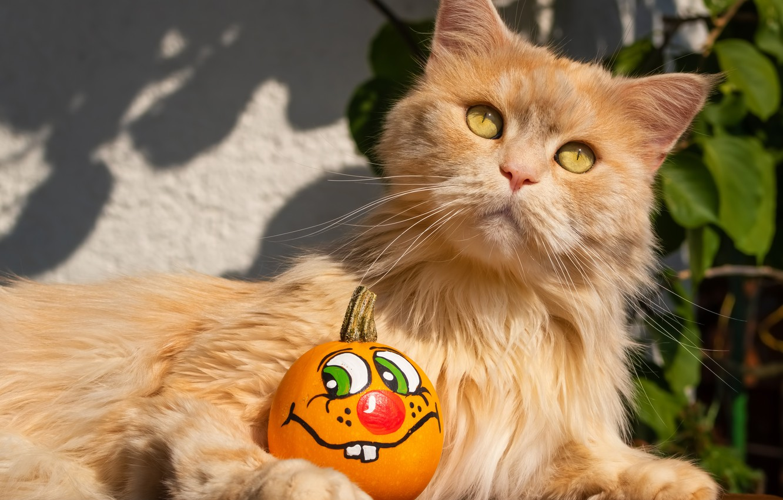 Photo wallpaper cat, light, pumpkin, red, Halloween, smiley
