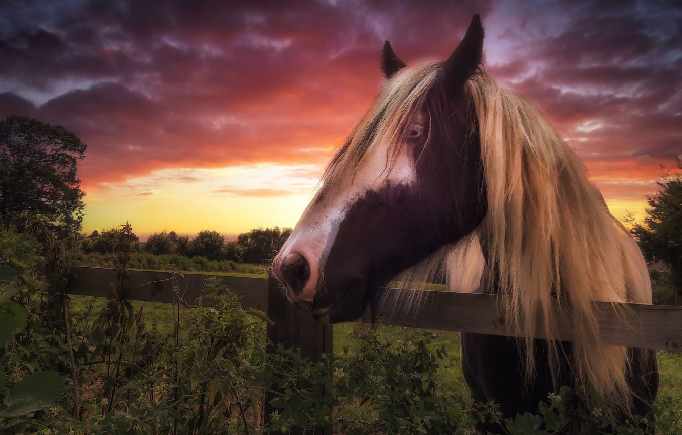 Photo wallpaper sunset, horse, the fence