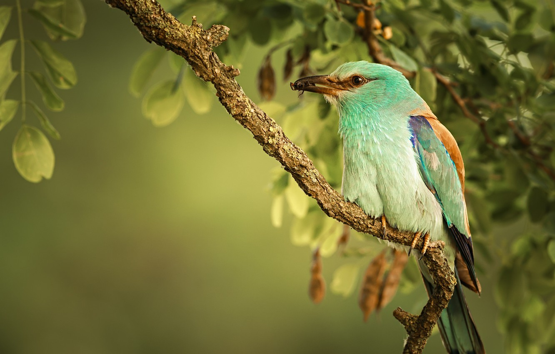 Photo wallpaper bird, branch, Roller
