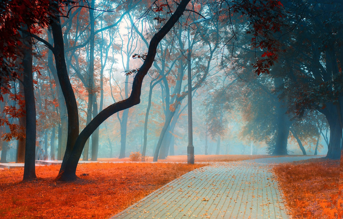 Photo wallpaper road, autumn, leaves, trees, landscape, branches, nature, fog, Park, trunks, foliage, tile, post, morning, track, …
