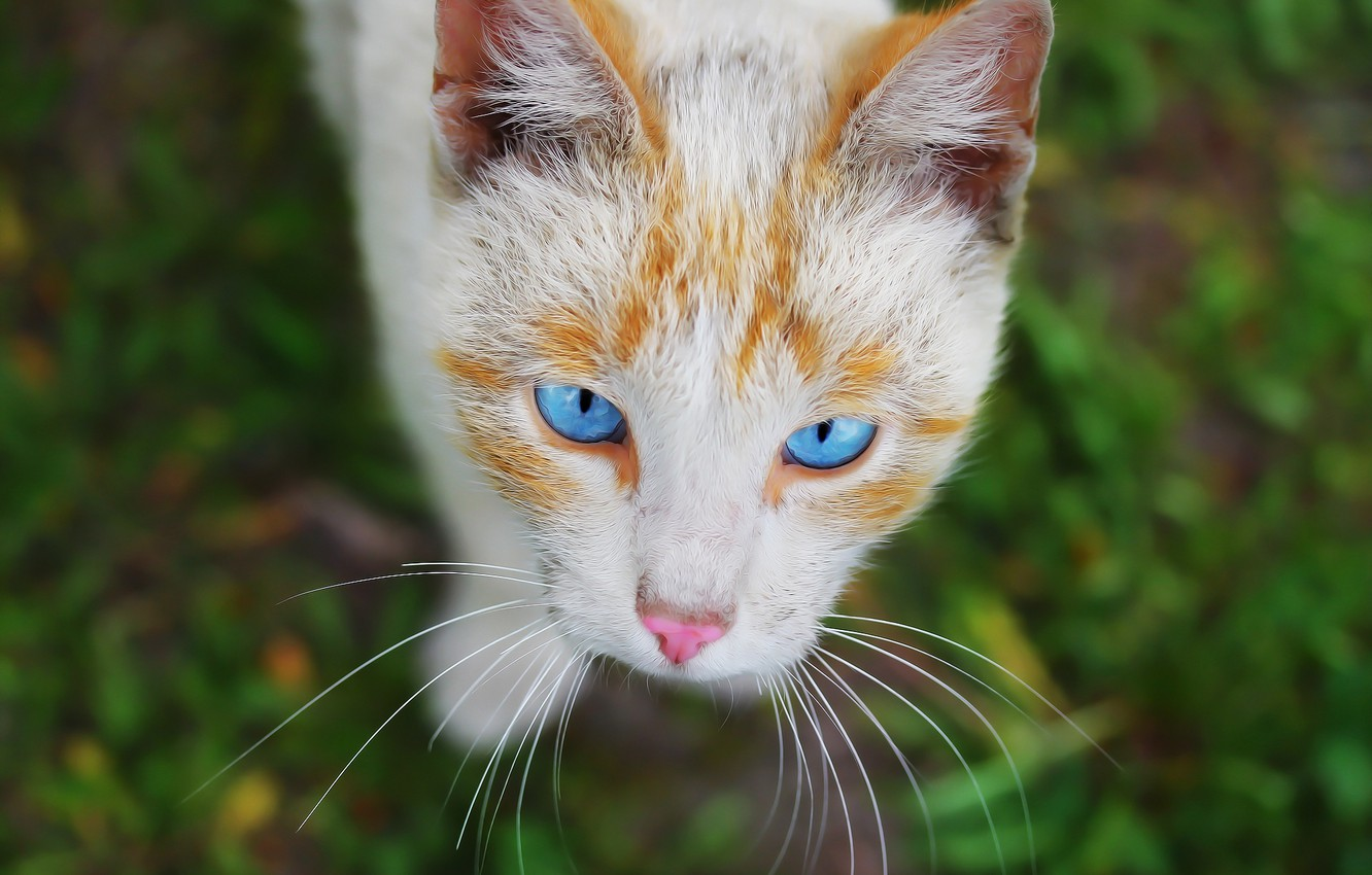 Photo wallpaper eyes, cat, background, face