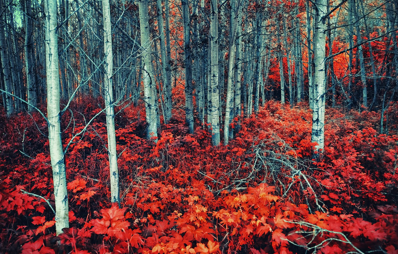 Photo wallpaper forest, summer, nature