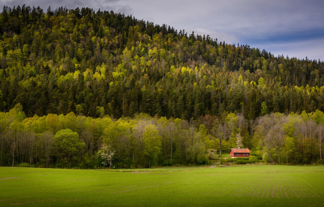 Photo wallpaper field, forest, house