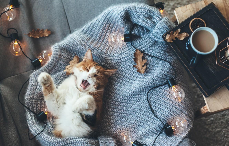 Photo wallpaper autumn, cat, heat, coffee, cat, light bulb, sweater