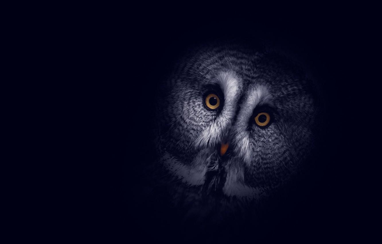Photo wallpaper background, owl, dark, head