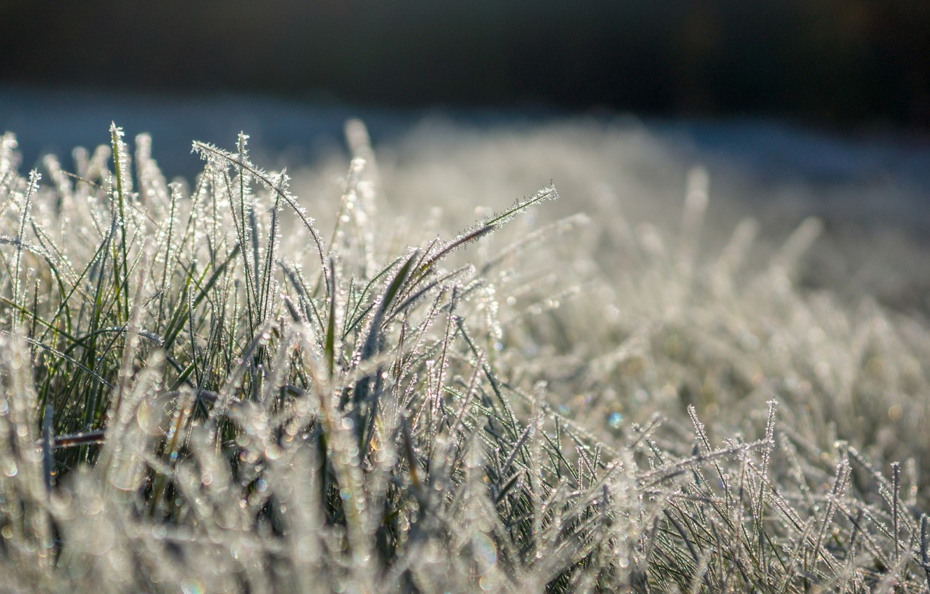 Photo wallpaper frost, grass, the sun, Shine