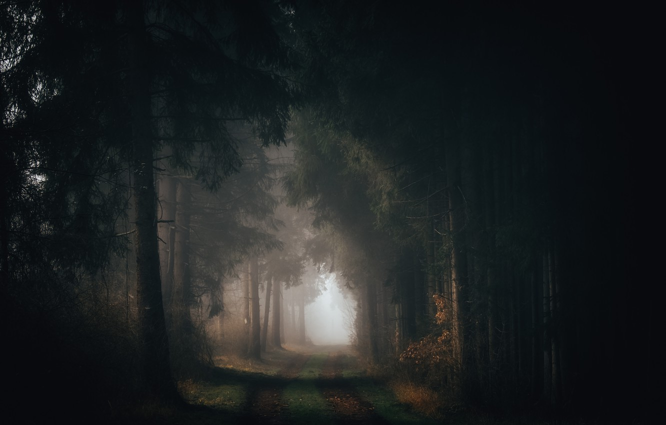Photo wallpaper road, forest, nature