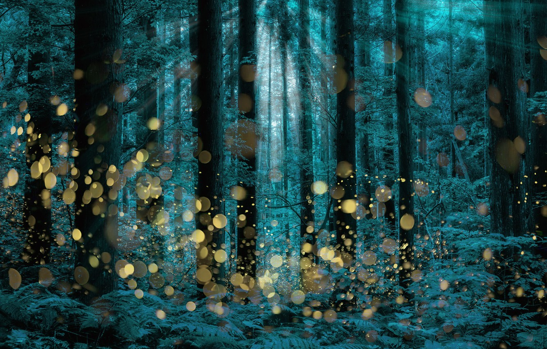 Wallpaper Trees Firefly Longexposure Shining Forest Images For Desktop Section Priroda Download