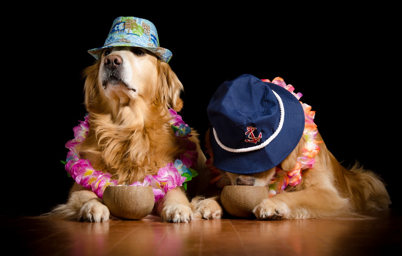 Photo wallpaper dogs, flowers, coconuts
