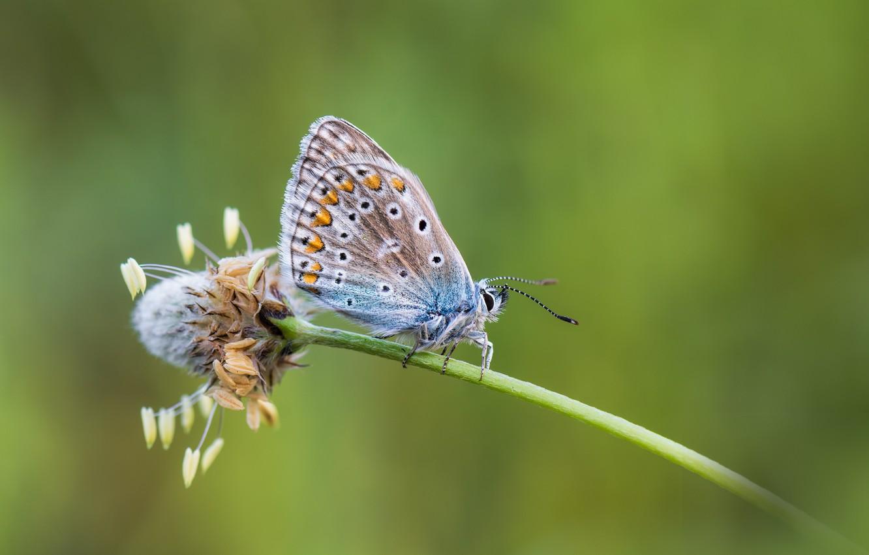 Photo wallpaper flower, butterfly, butterfly