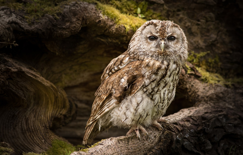 Photo wallpaper look, nature, owl, bird, owl, owl