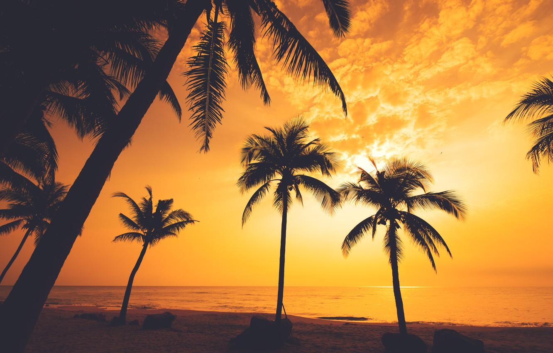 Photo wallpaper sea, beach, summer, sunset, palm trees, shore, silhouette, summer, beach, sea, sunset, seascape, beautiful, paradise, …